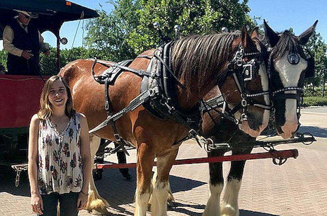 Clydesdales at Temecula's South Coast Winery.
