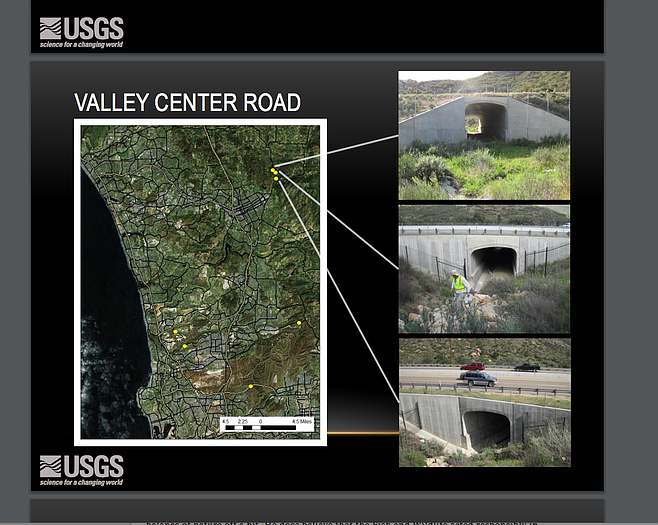"""""""Exclusionary fencing has been installed to encourage the animals to use the tunnels."""""""
