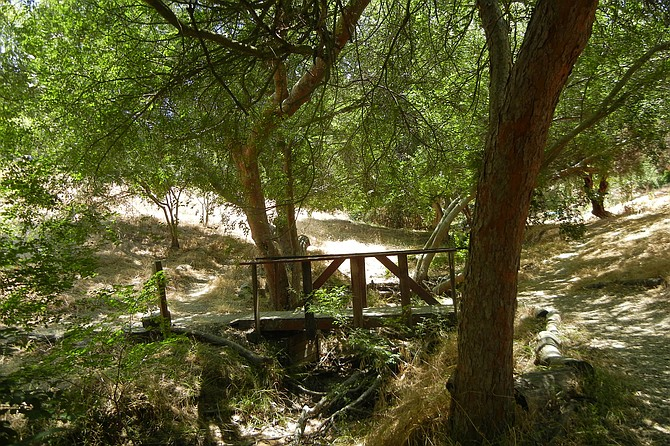 A wooden bridge is under a shady grove of Chinese elms