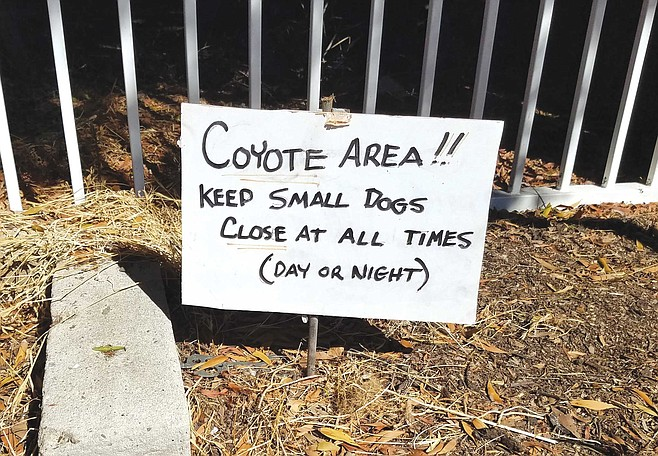 'Coyote Area!!' warns a small hand-lettered sign posted within walking distance from Arredondo's front porch.