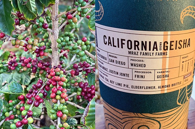From coffee cherries in Oceanside to Bay Park roasted coffee beans - Image by Justin Jonte