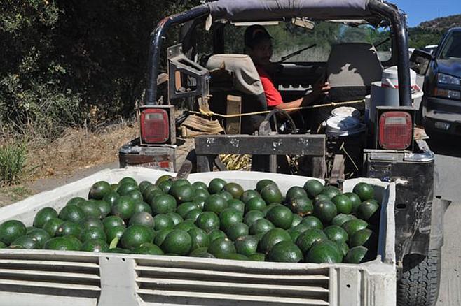 CL Stehly Farms Organics 3.jpg