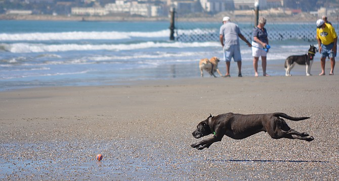 Coronado's Dog Beach is unfenced and inaccessible to some.