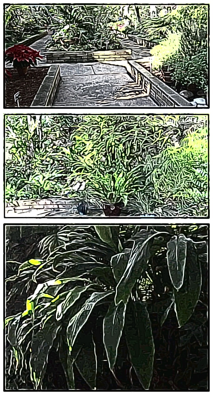 Arboretum in Balboa Park. Created with Google Storyboard app.