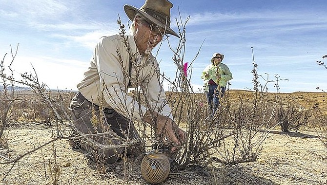 """U.S. Fish and Wildlife Service Biologist John Martin says, """"I guarantee you we won't see any Quino. Not in this season."""" Before the recent drought, he saw the Quino checkerspot butterfly, abundant in """"double figures."""" Then, in the rainless years, probing half-a-dozen prime spots, he saw none. - Image by Joanna Gilkeson/U.S.Fish and Wildlife"""