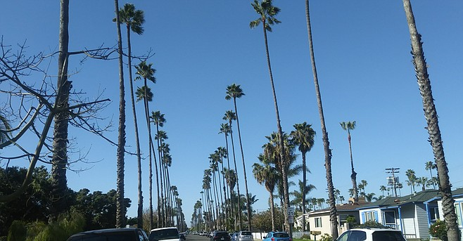 """In downtown Oceanside we are forced to have palms in every single yard."""