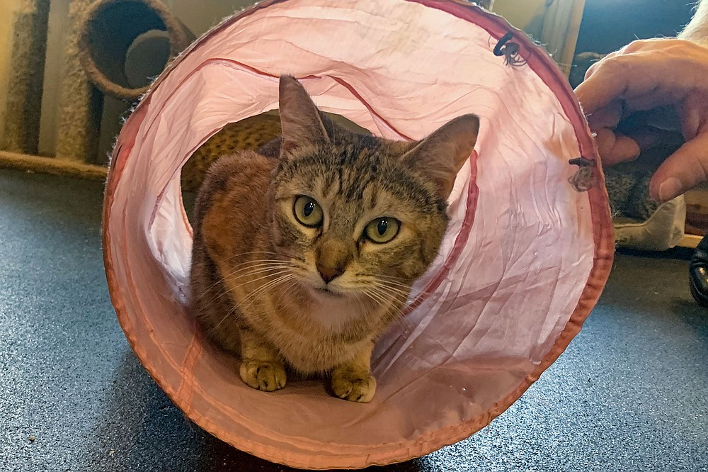 Flora plays in a cat tunnel.