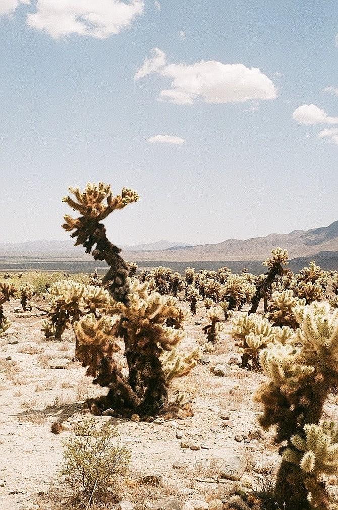 A visit to the Cholla Cactus Garden.