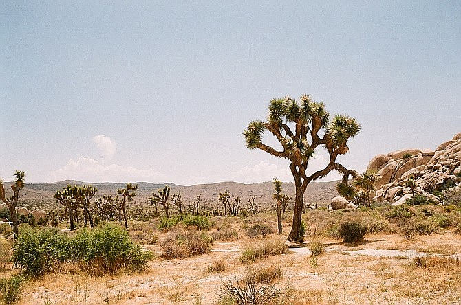 Escape To The Mojave Joshua Tree S Must Sees San Diego Reader