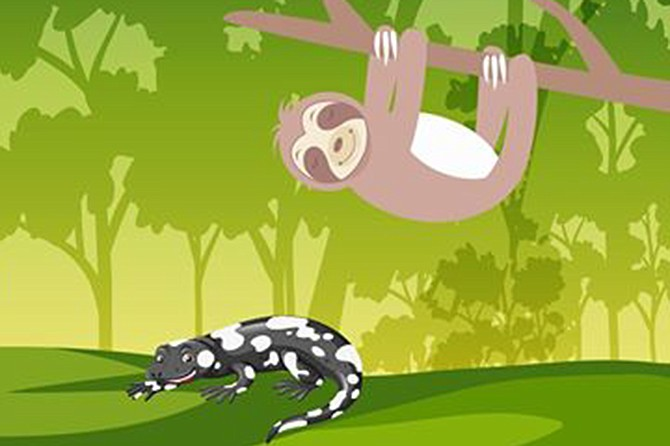 Hang and interact with Paco the Sloth and Clyde the Tegu.