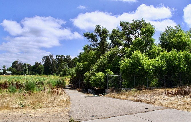 """The Jungle"" off Mission Road"