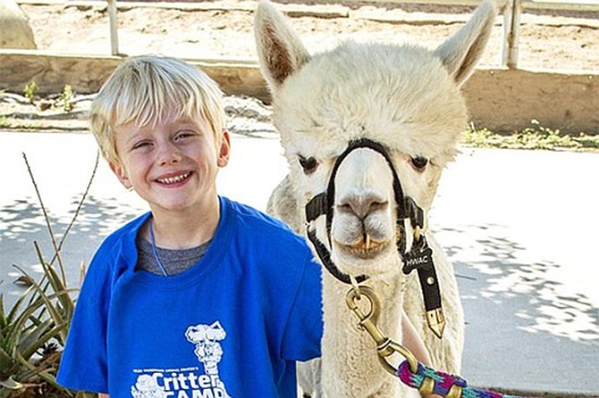 Children will experience amazing animal interactions and summer camp activities, including animal-themed games, crafts, songs and more!