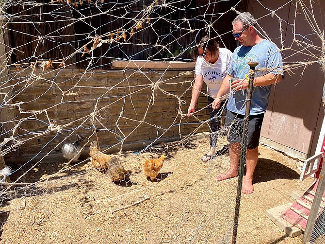 """The Mitchells' four-year chicken journey has been a bonding experience, Carrie says. """"When we got them, we just looked at them as providers of eggs,"""" she says. """"We didn't realize they were going to become pets, but then we named them and, well, they became our pets."""""""