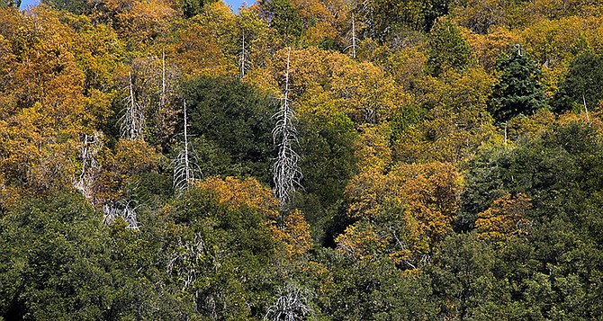 Palomar Mountain in the fall