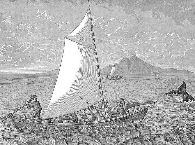 They were nicknamed devil fish — a term coined by whalers who saw firsthand the damage a 40 foot gray whale could wreak on frail wooden boats.