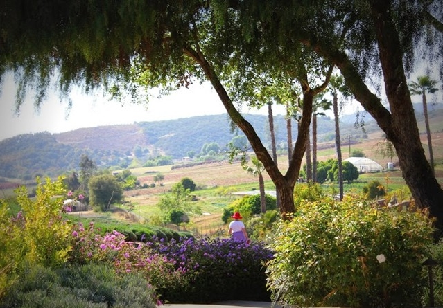 Keys Creek Lavender Farm | San Diego Reader