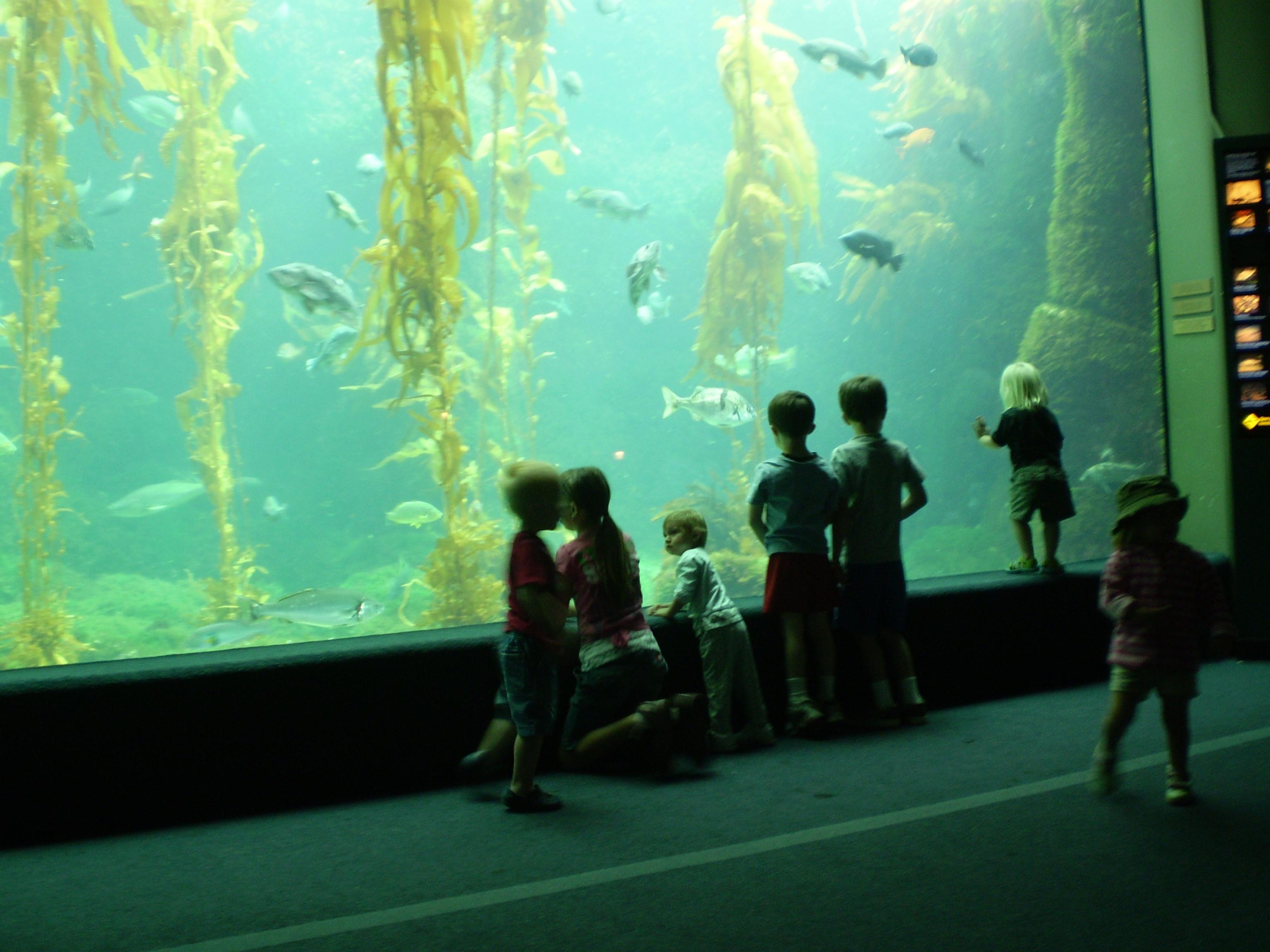 birch aquarium at scripps san diego reader