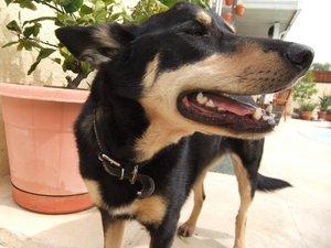 DogsLife's avatar