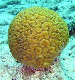 coralcay's avatar