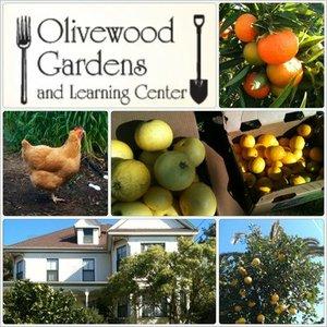 OlivewoodGardens's avatar