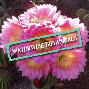 waterwisebotanicals's avatar