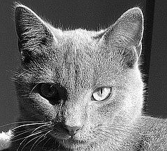 xwagner's avatar