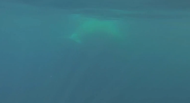 A first-person view as Ryan swims with a blue whale at a safe distance.