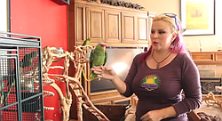 An interview with Brooke Durham of SoCal Parrot, a rescue and rehabilitation organization. Featuring footage and discussion of the flight cage, nutrition, communication and flock behavior, and rehabilitation/release.