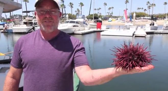 Matt Pressly gives the lowdown on scarfing sea urchins.