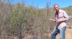 Ric Halsey, founder of the Chaparral Institute, discusses San Diego County's chaparral and coast sage scrub environments and individual species, as well as tactics for survival in a drought climate.