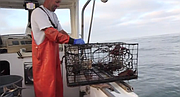 Shad Catarius talks about fishing for lobster off the coast of San Diego.
