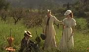 ...that kiss in an Italian poppy field